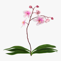 3d model orchid 2 nature