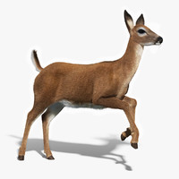 White Tailed Doe(FUR)(ANIMATED)