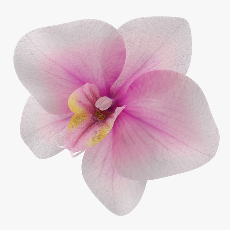 orchid flower 3d max
