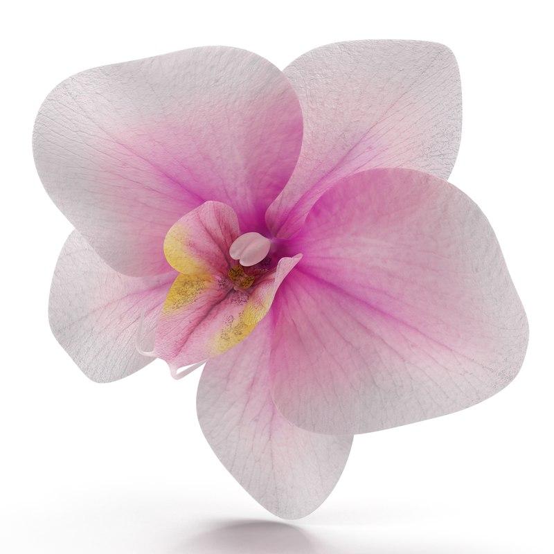 3d model of orchid flower