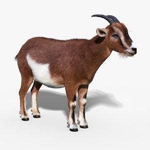 goat fur 3d model