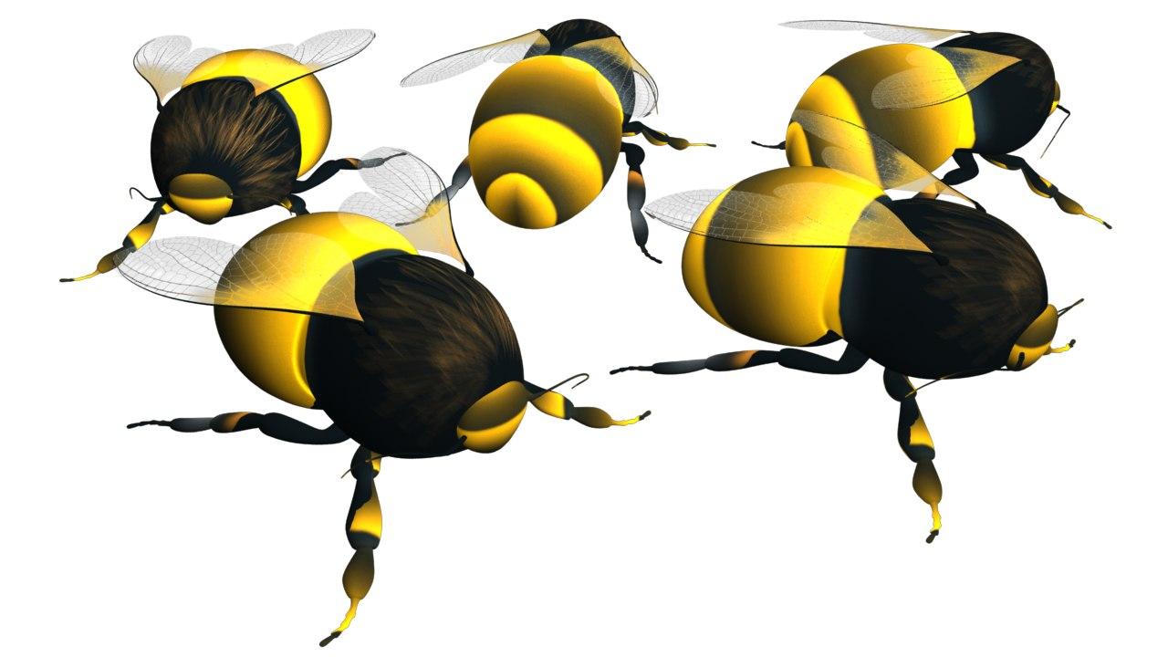 maya bees insects honey