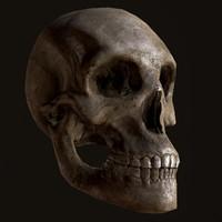 3d model far skull