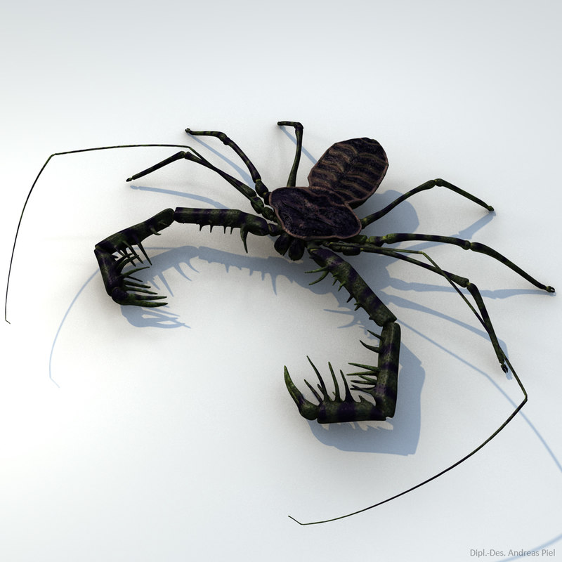 3d realistic tailless whip scorpion model