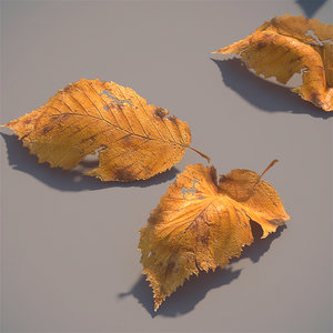 3d autumn leaves