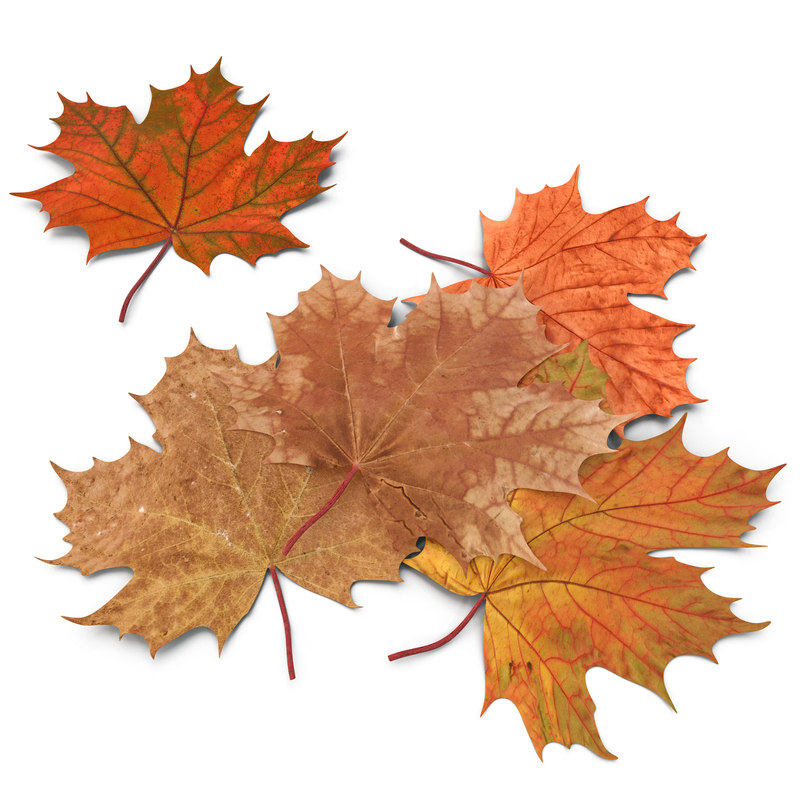 autumn maple leaves 3ds