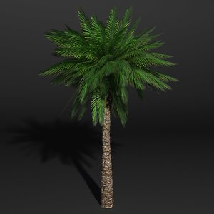 date palm dwg