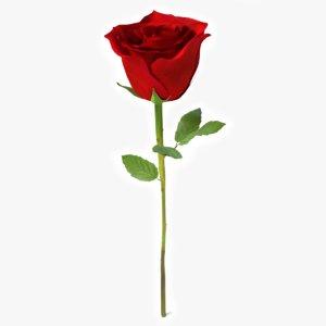 rose 3d model