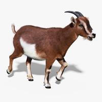 goat fur rigged 3d max