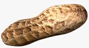 3d photo realistic roasted peanut