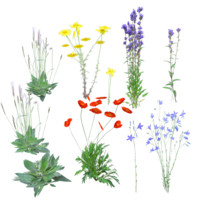 European Wildflowers 1