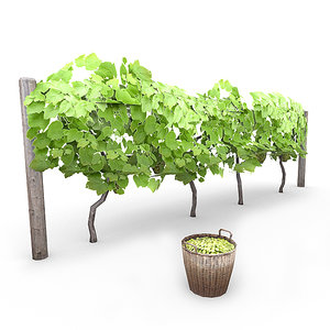 grapevine basket grapes 3d model