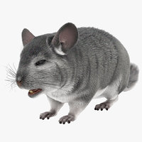 3d chinchilla fur model