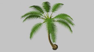 3d model cocos plant coconut