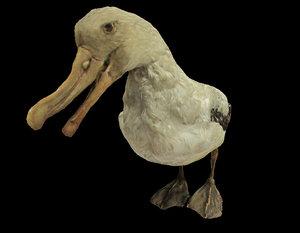 bird albatross mallemuck 3d 3ds