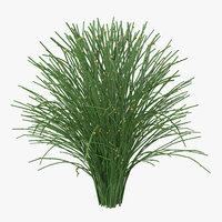 psilotum nudum whisk fern 3d model