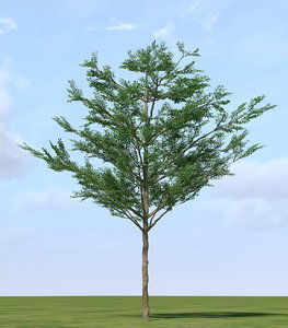 tropical almond terminalia 3d max