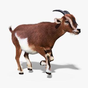 goat fur anim max