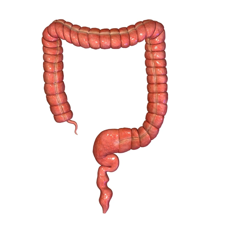 large intestine obj