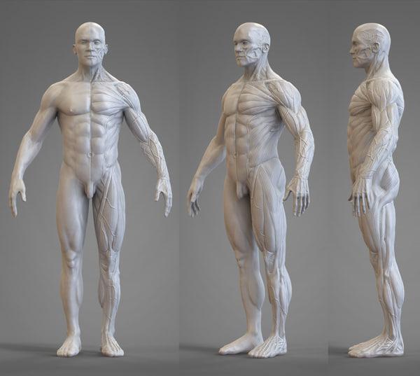 body reference anatomy veins obj