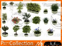 Big Plant Collection