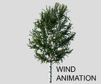 Birch tree with wind animation