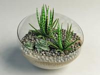 succulent cactus composition