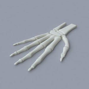 3d palm skeleton model