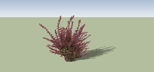 3ds max berberis purple shrub