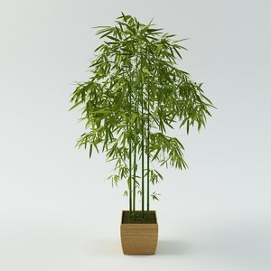3d max bamboo palm