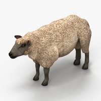 lamb sheep 3d model
