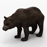 3d model bear