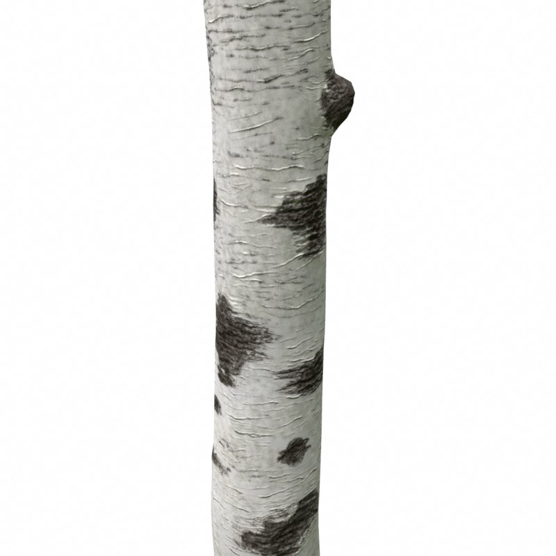birch tree trunk 3d obj