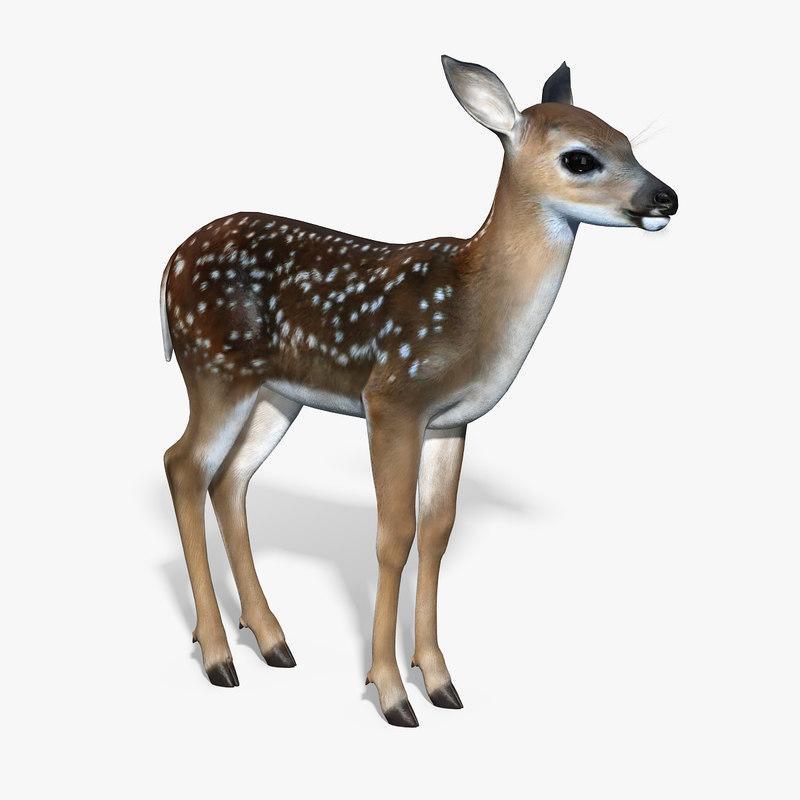 3d fawn baby deer