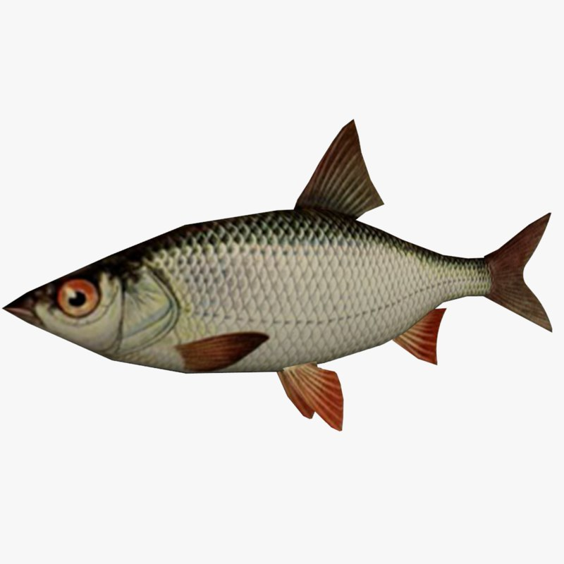 3ds ready realistic fish