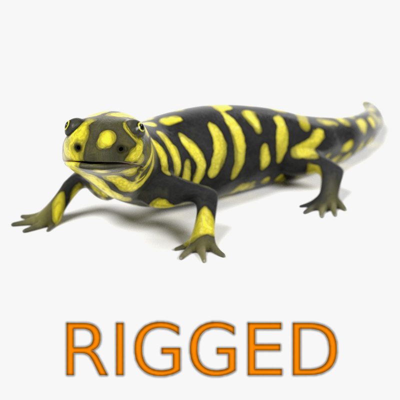 3d tiger salamander rigged model