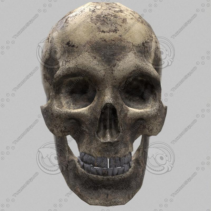 3d model ready skull pbr