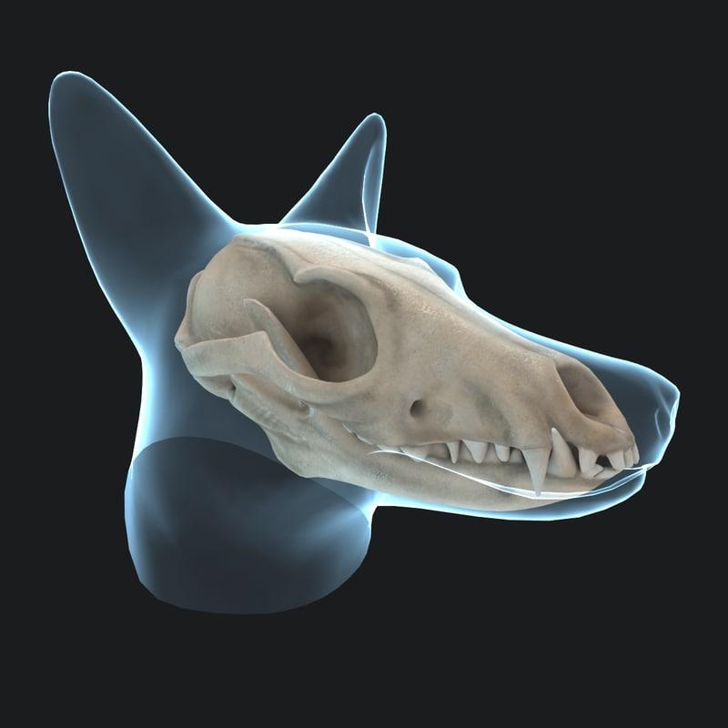 3d model reynard skull