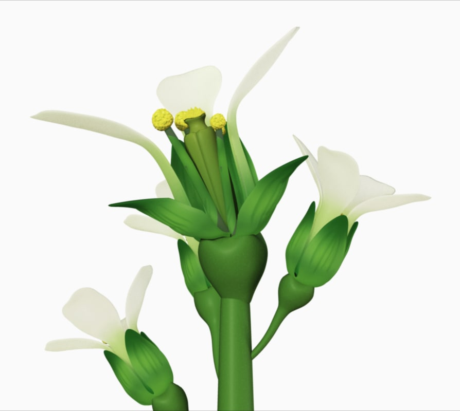 arabidopsis plant 3d ma