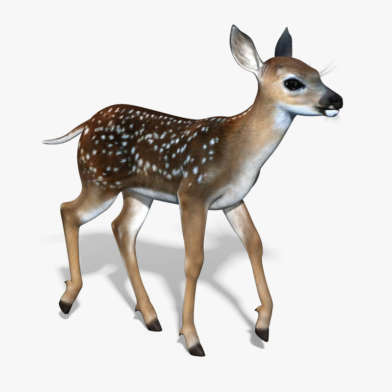 3d fawn baby deer rigged model