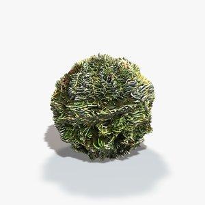 Pine Tree Seamless Texture