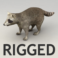 Rigged raccoon