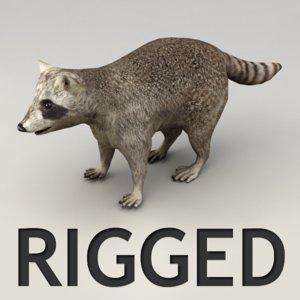 max rigged raccoon