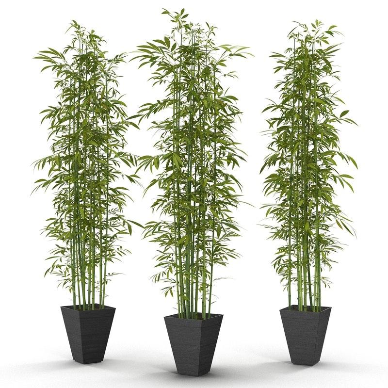 green bamboo max