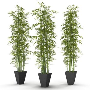 green bamboo 3d max