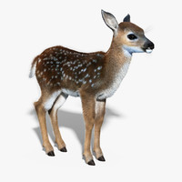 Fawn(Baby Deer)(FUR)