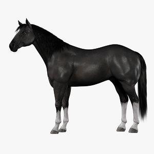 horse black fur