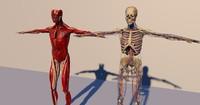 human anatomy c4d