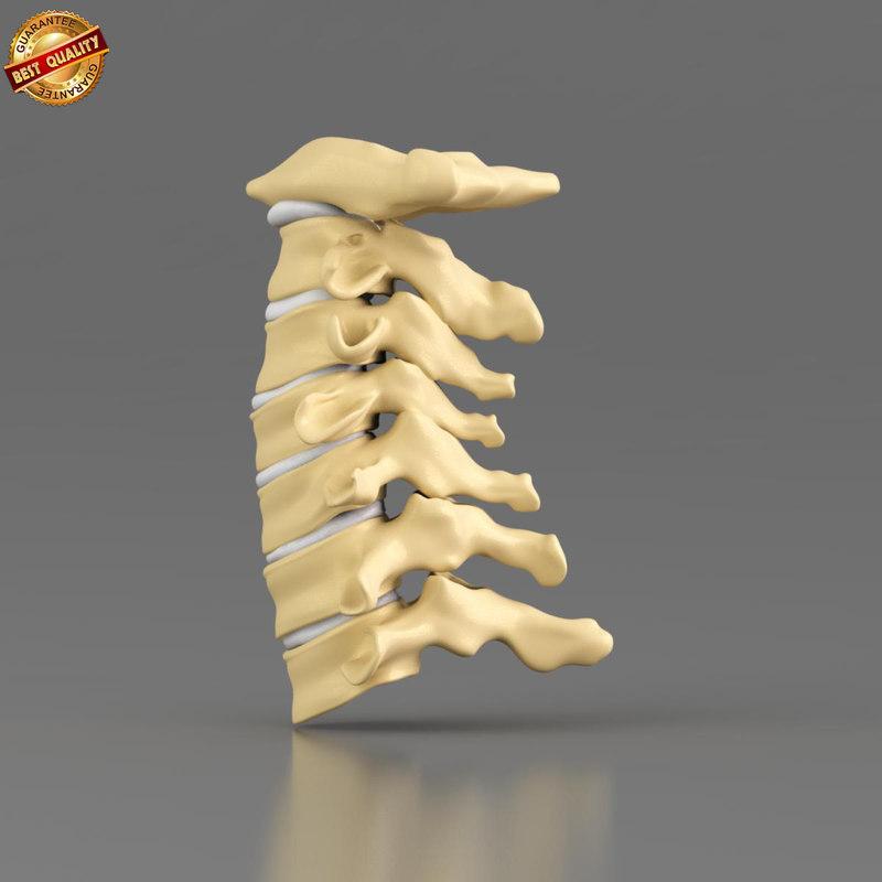 fbx anatomy medical