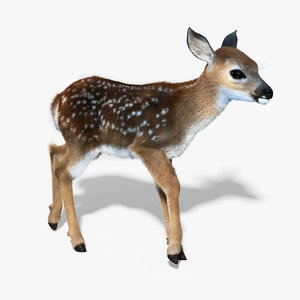 fawn baby deer fur 3d model